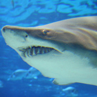 Shark Bite or Shark Caesarean: What's the Difference?